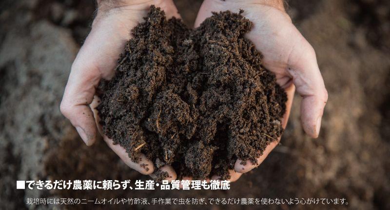 できるだけ農薬に頼らず、生産・品質管理も徹底